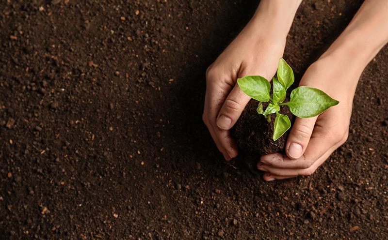 La-scelta-responsabile-e-sostenibile-di-VedCarta